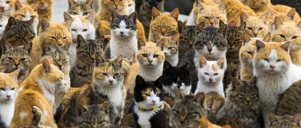 De nombreux chats